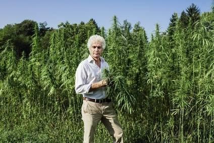 Aumento de altura de Cannabis Sativa