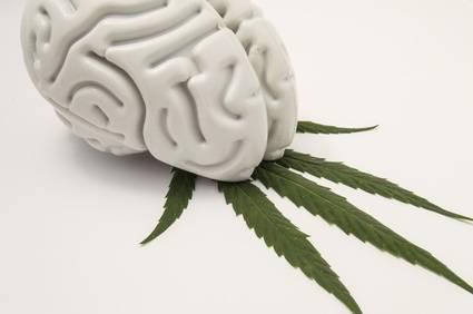 Efecto cannabis sativa