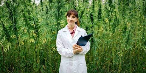Sensi Seeds semillas de cannabis
