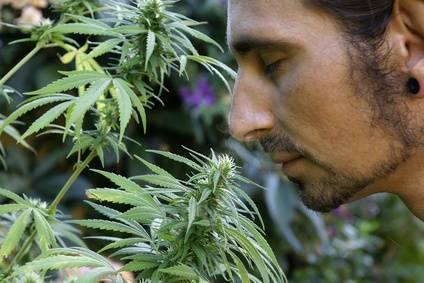Weed Seed Shop semillas de cannabis