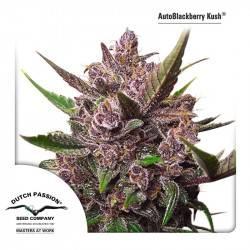 AutoBlackberry Kush Feminizadas