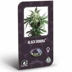 Black Domina Feminizadas (Classic Redux Serie)