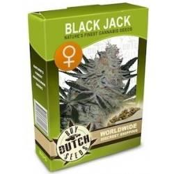 Black Jack Feminizadas