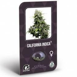 California Indica Feminizadas (Classic Redux Serie)