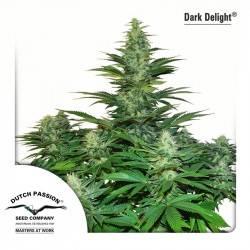 Dark Delight Feminizadas