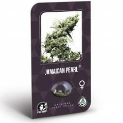 Jamaican Pearl Feminizadas (Classic Redux Serie)