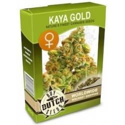 Kaya Gold Feminizadas