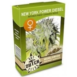 New York Power Diesel Feminizadas