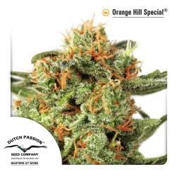 Orange Hill Special Feminizadas