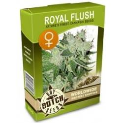 Royal Flush Feminizadas