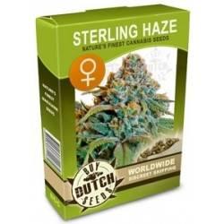Sterling Haze Feminizadas