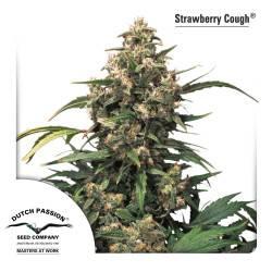 Strawberry Cough Feminizadas